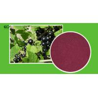 Ribes Nigrum L Organic Food Ingredients Blackberry Fruit Powder With Flavonoids