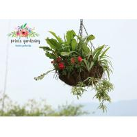Wholesale Classic Hanging Basket Flowers Gardening Decorate For Indoor / Outdoor from china suppliers