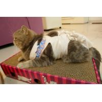 Wholesale cardboard cat scratcher from china suppliers