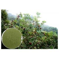 Anti-diabetic anti-oxidation myricetin Bayberry Bark Extract