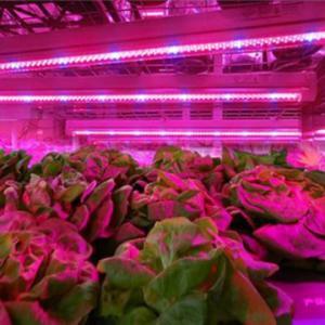 Wholesale SMD 2835  Led Indoor Garden Lights For Flower / Vegetable , 6-8m Sensor Distance from china suppliers