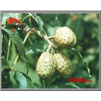 China Herb Horse Chestnut Extract(Escin 20%) on sale