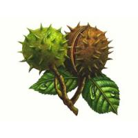 China Horse Chestnut Extracts  Aescin 20% on sale