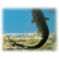 Wholesale The catfish from china suppliers
