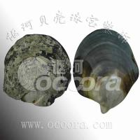 Buy cheap FrontofBlackMotherofPearl from wholesalers
