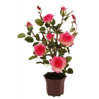 Wholesale 50CM Rose Bush PLANT,TREE from china suppliers