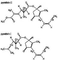 Wholesale Baicao No.1 Pyrethrin from china suppliers