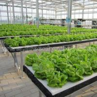 Wholesale Greenhouse DFT Hydroponic Cultivation System for Planting from china suppliers