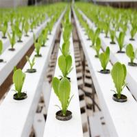 Wholesale Agricultural Greenhouse Flat Hydroponics commercial hydroponics from china suppliers