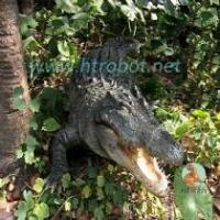 Wholesale Simulate animals and insects crocodile from china suppliers