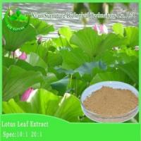 Wholesale Weight Loss Lotus Leaf Extract from china suppliers