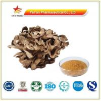Buy cheap Factory Supply Maitake Extract/Wholesale Grifola Frondosa Extract from wholesalers