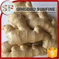 Wholesale Health food shandong fresh ginger from china suppliers