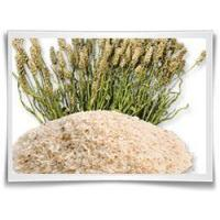 Wholesale Psyllium Husks from china suppliers