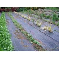 Wholesale Ground Cover Net from china suppliers