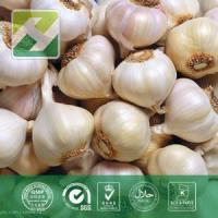 Buy cheap Garlic Extract from wholesalers