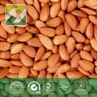 Buy cheap Bitter Apricot Extract Amygdalin from wholesalers