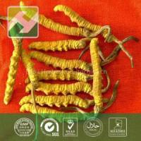 Buy cheap Cordyceps Extract Polysaccharides from wholesalers