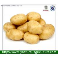 Wholesale 2013 New Crop Potato of High Quality from china suppliers