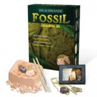 Wholesale Real Fossils from china suppliers