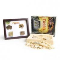 Wholesale Fossil Photo Frame dig kit from china suppliers