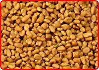 Wholesale Fenugreek Seeds from china suppliers