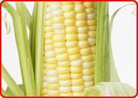 Buy cheap Maize from wholesalers