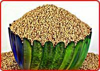 Wholesale Coriander Seeds from china suppliers