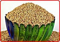 Quality Coriander Seeds for sale