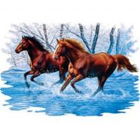 Wholesale Two Horses in Water Adult T-shirt A2335D from china suppliers