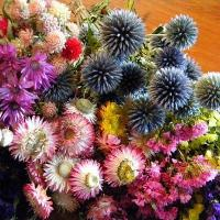 Wholesale Everlasting Flowers Offer Beauty for Years from china suppliers