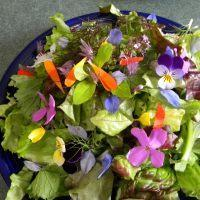 Wholesale Sprout Your Own Microgreens, Salad Mixes, and Edible Flower Garnishes! from china suppliers