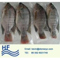 Wholesale Whole Round Tilapia from china suppliers