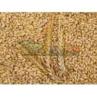 Buy cheap Fresh Chicken Eggs Barley Seeds from wholesalers